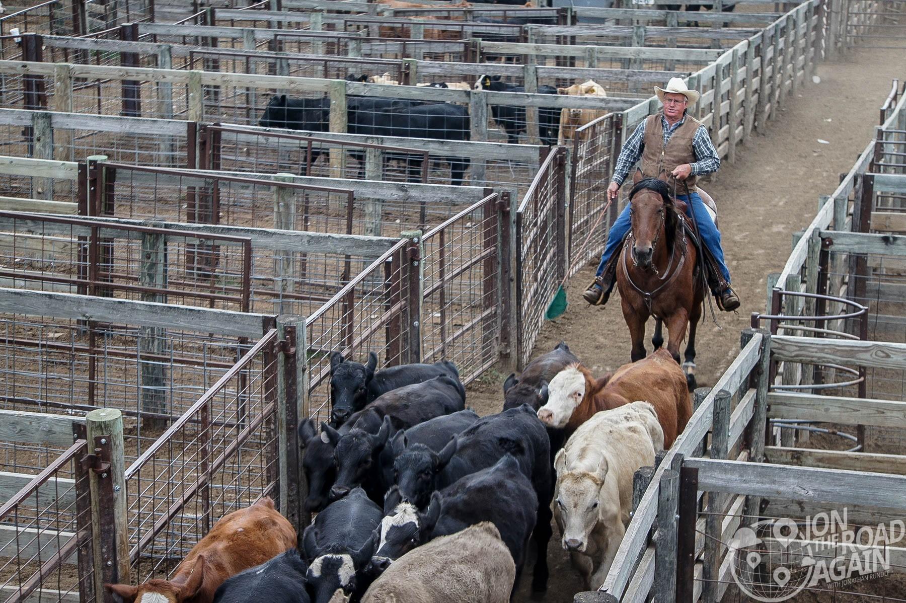 Oklahoma National Stockyards