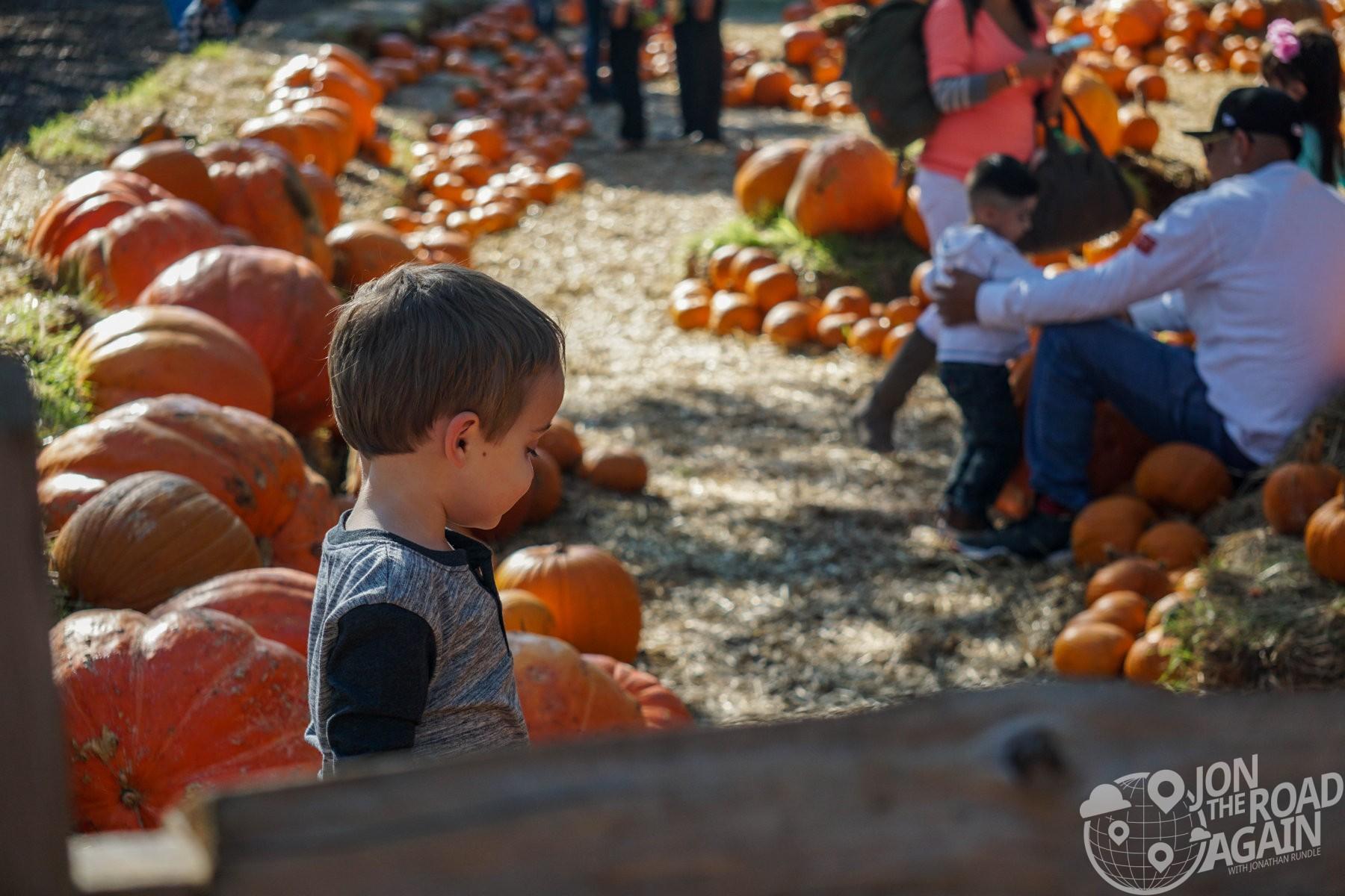 Mason chooses a pumpkin