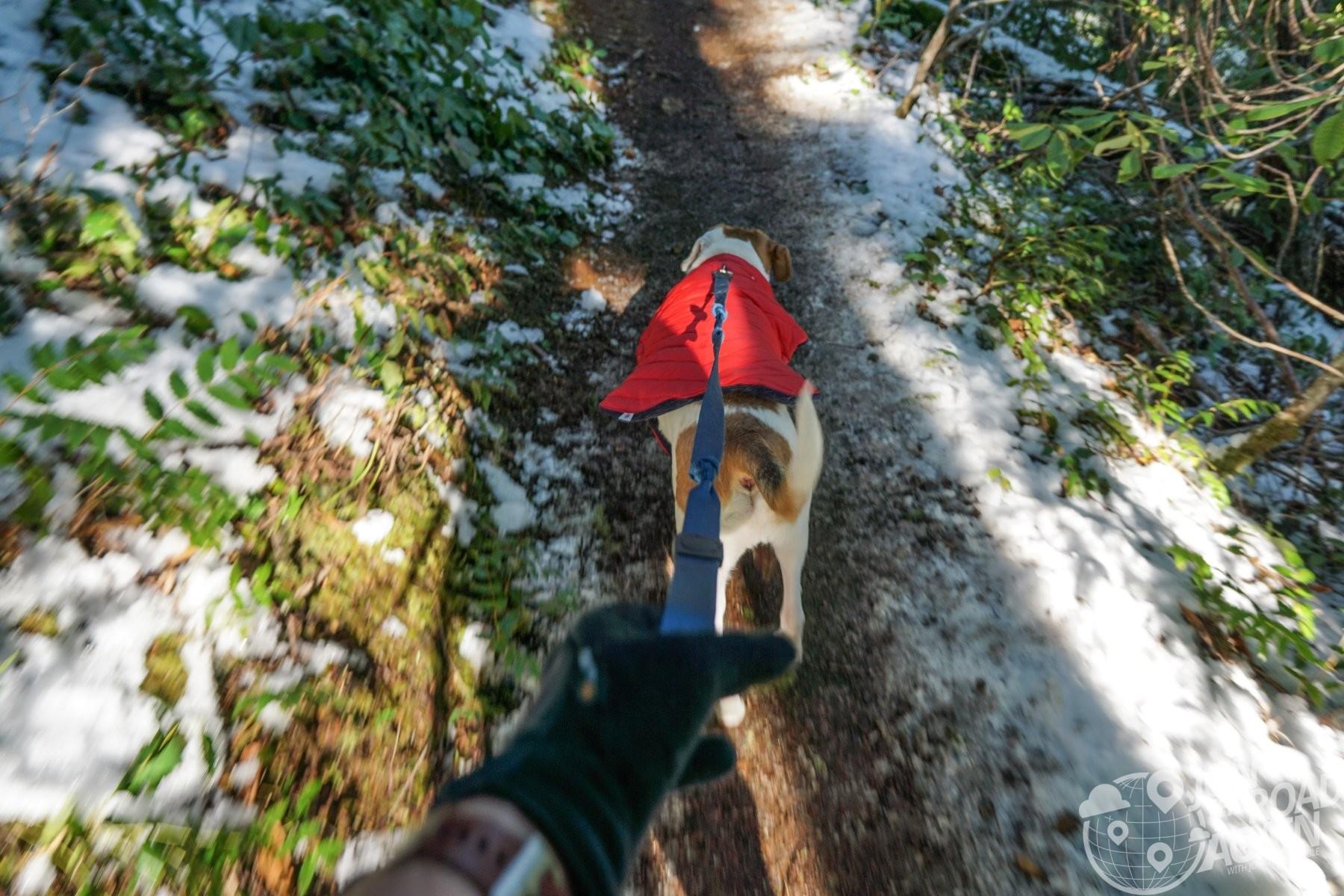 Hiking up Mount Walker