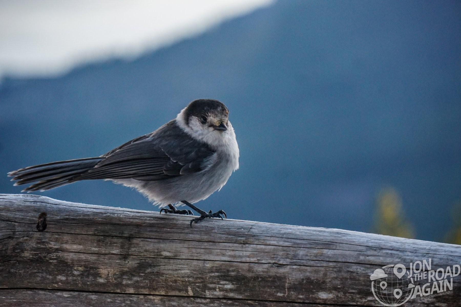 Mount Walker bird