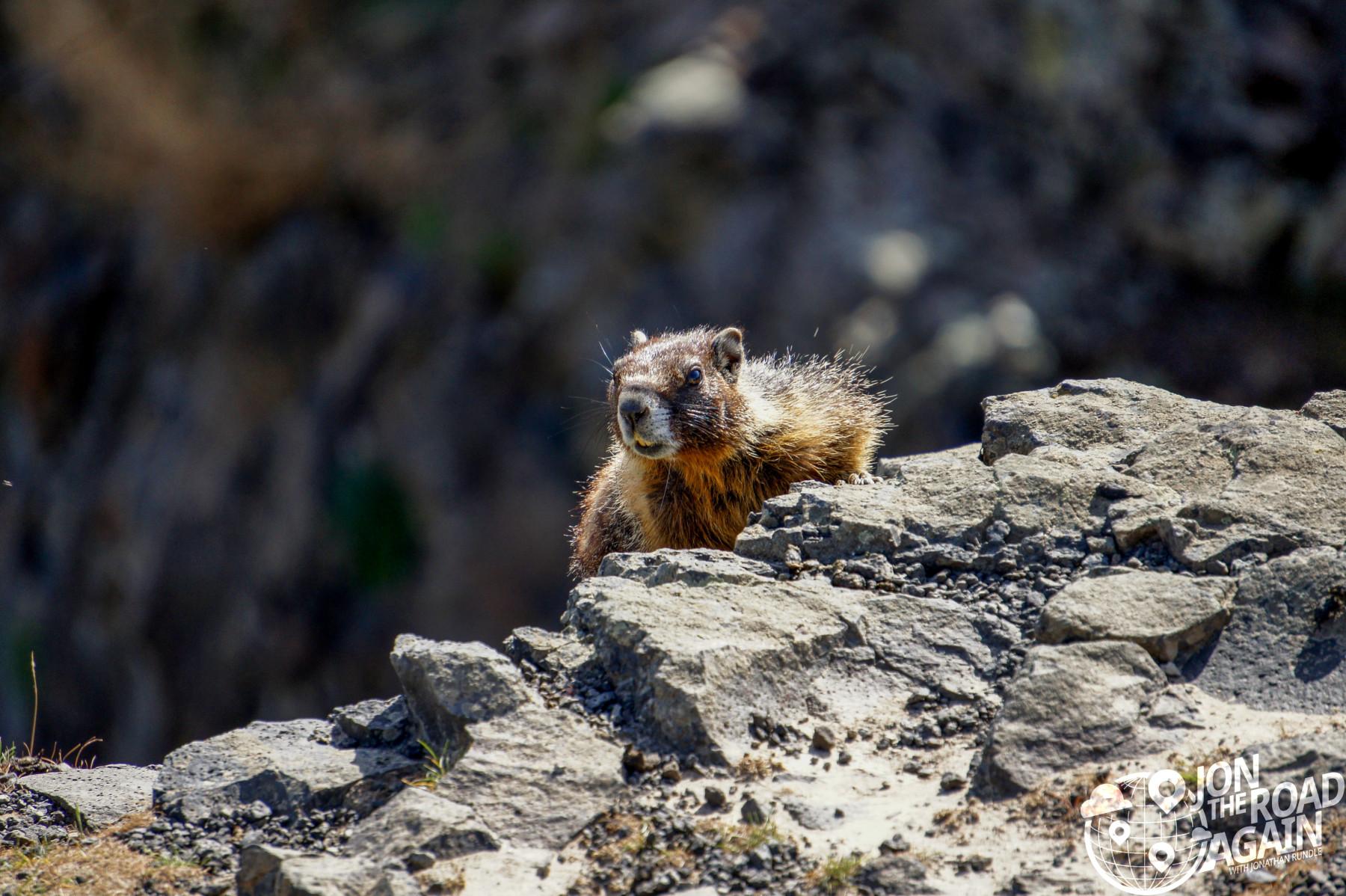 Palouse Falls chipmunk