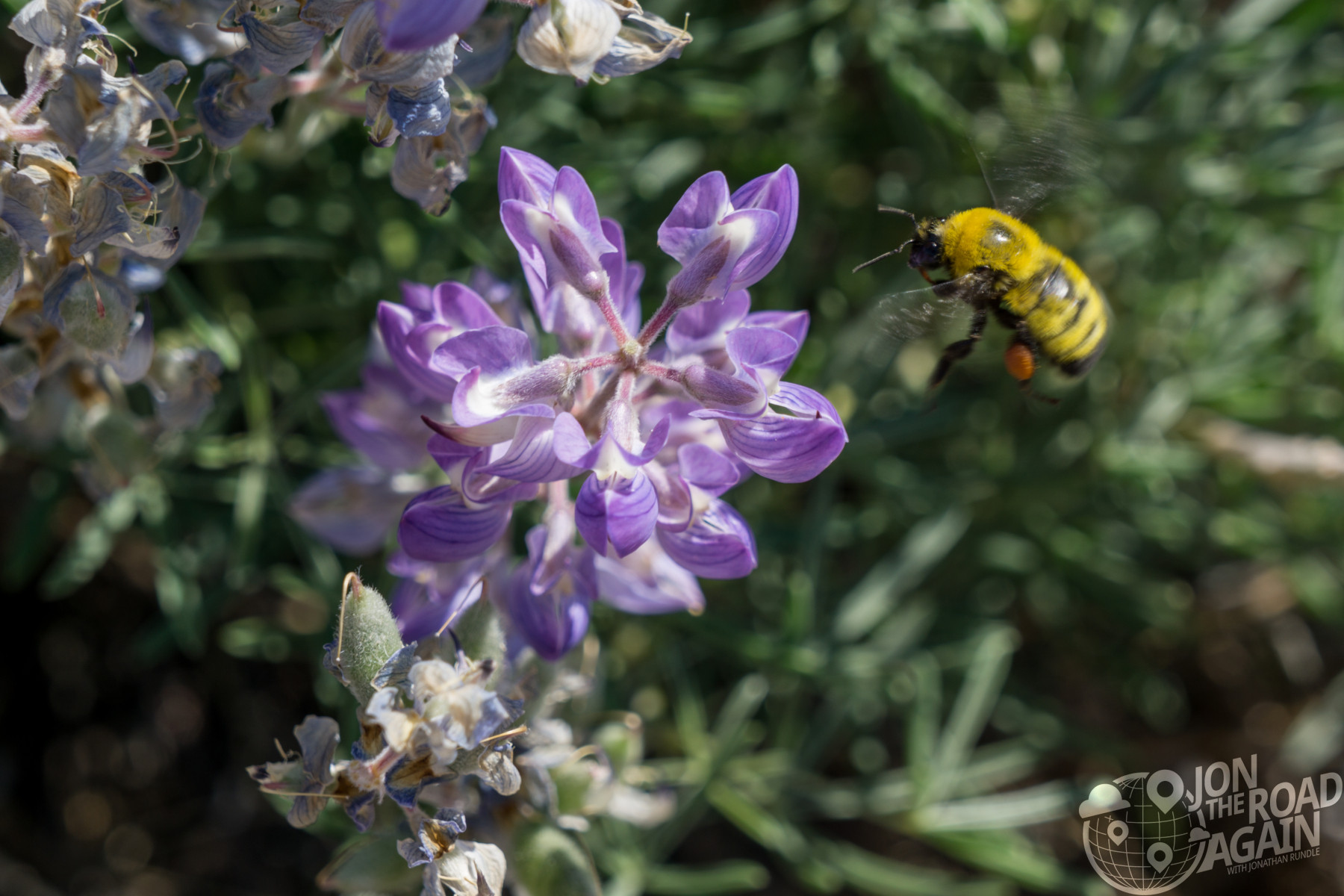 bee in arches