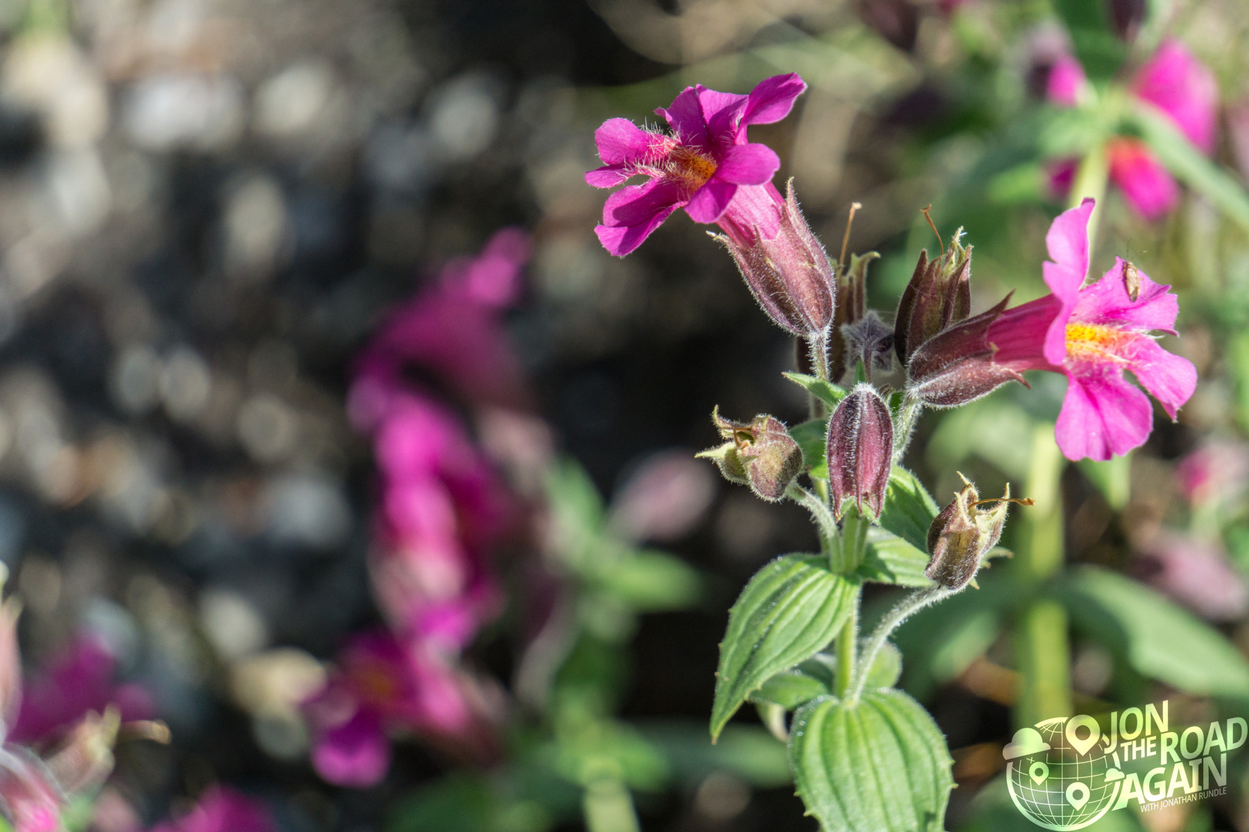 Flower at Artist Point