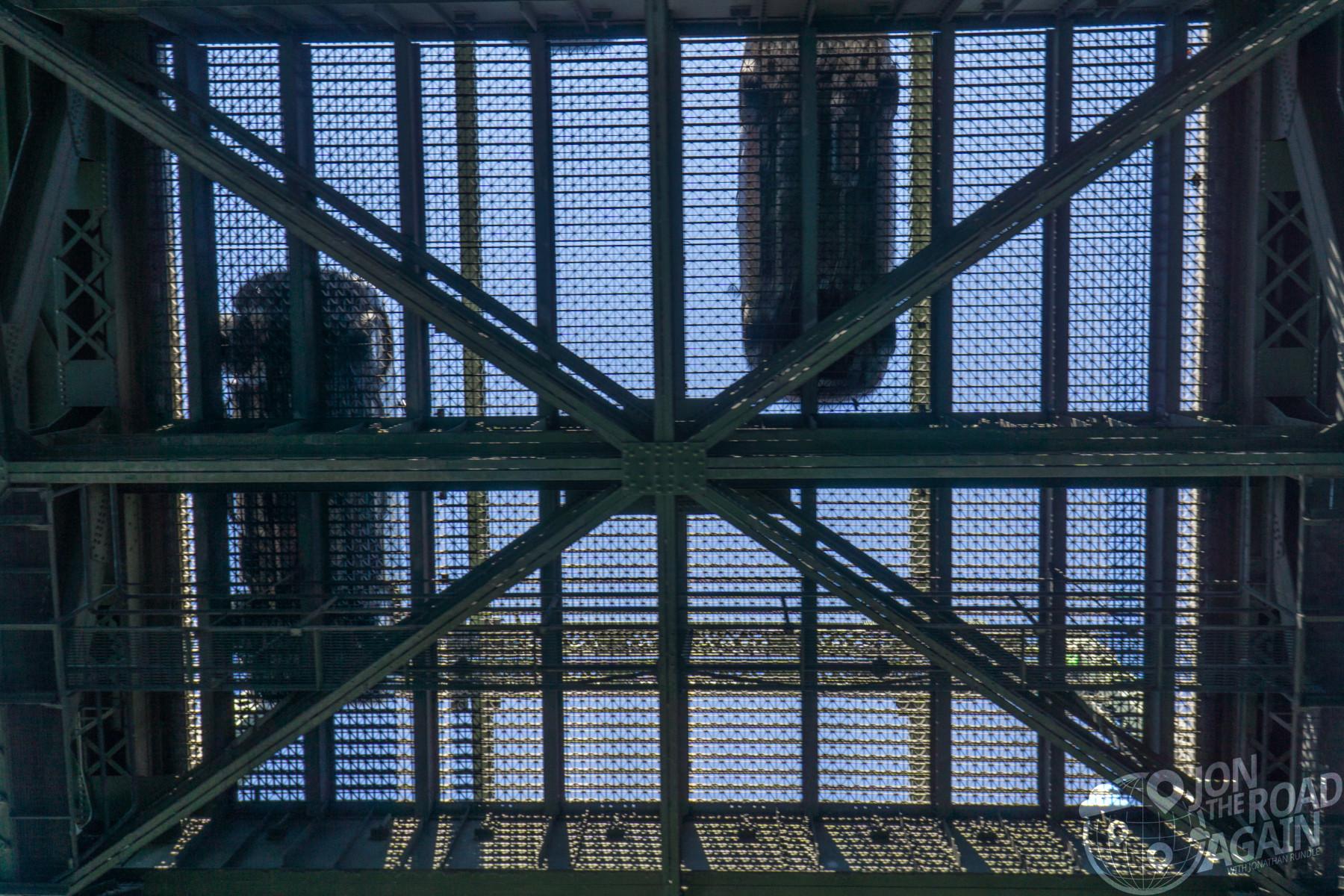 Under the university bridge
