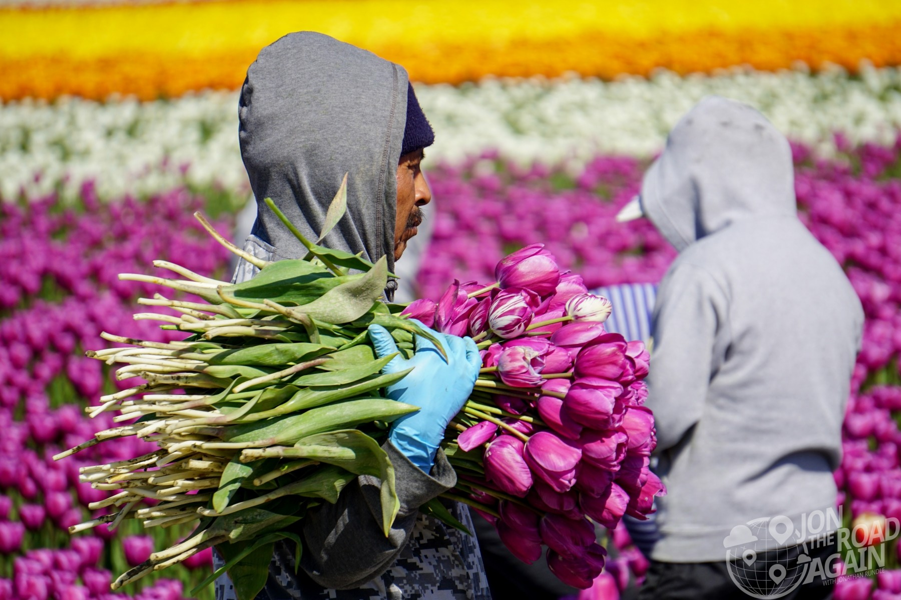 Election Day - hard working flower pickers