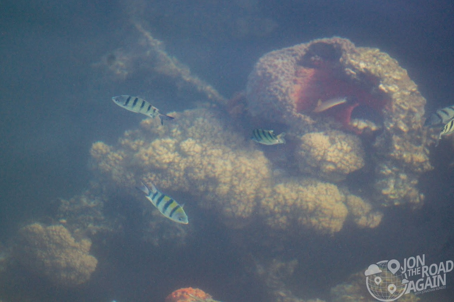 USS Arizona Reef