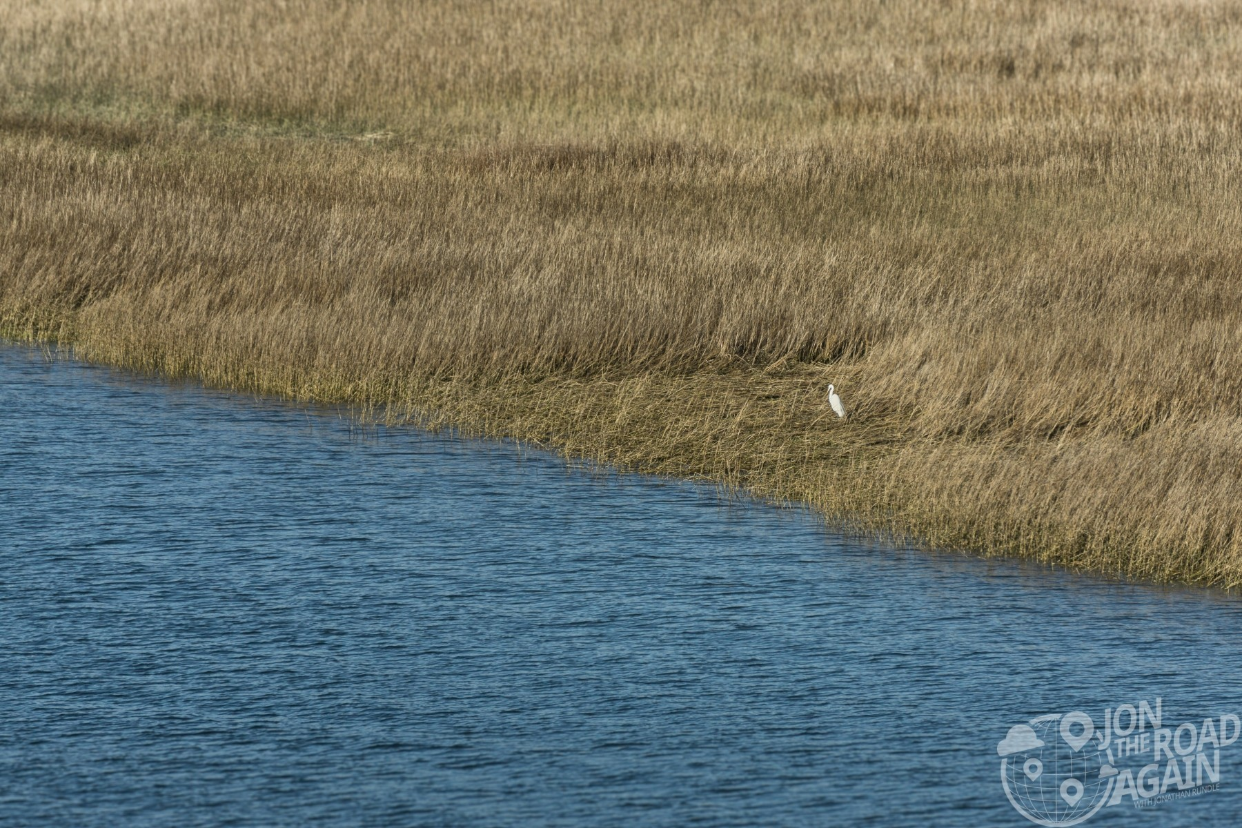 Egret on the Cooper River