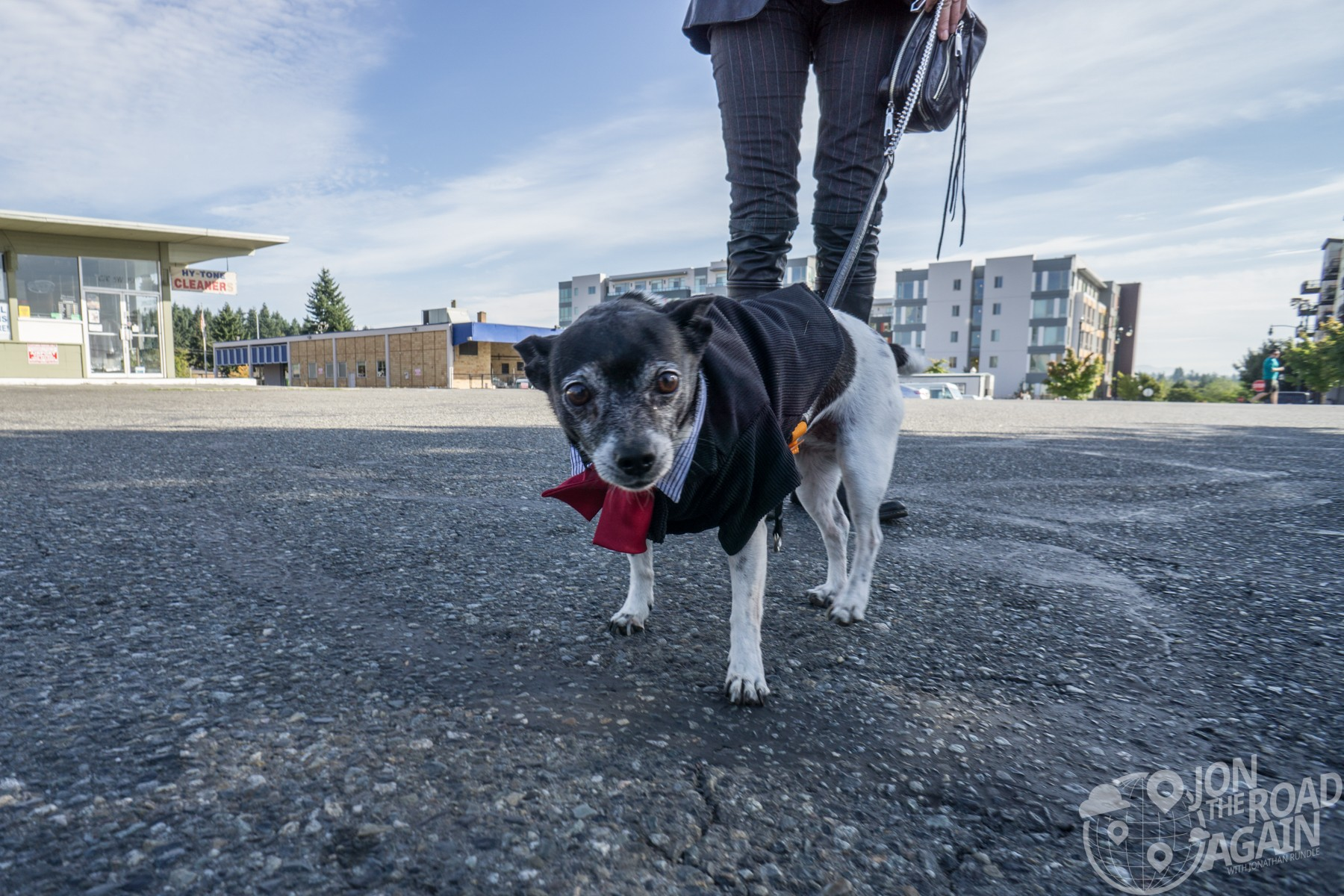 Dapper dog at Distinguished Gentleman's Ride Seattle