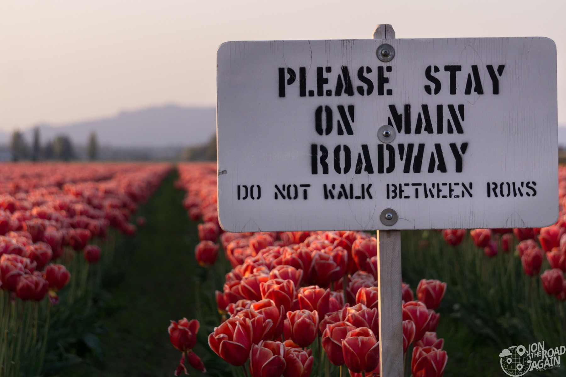 Skagit Valley Tulip Festival Sign