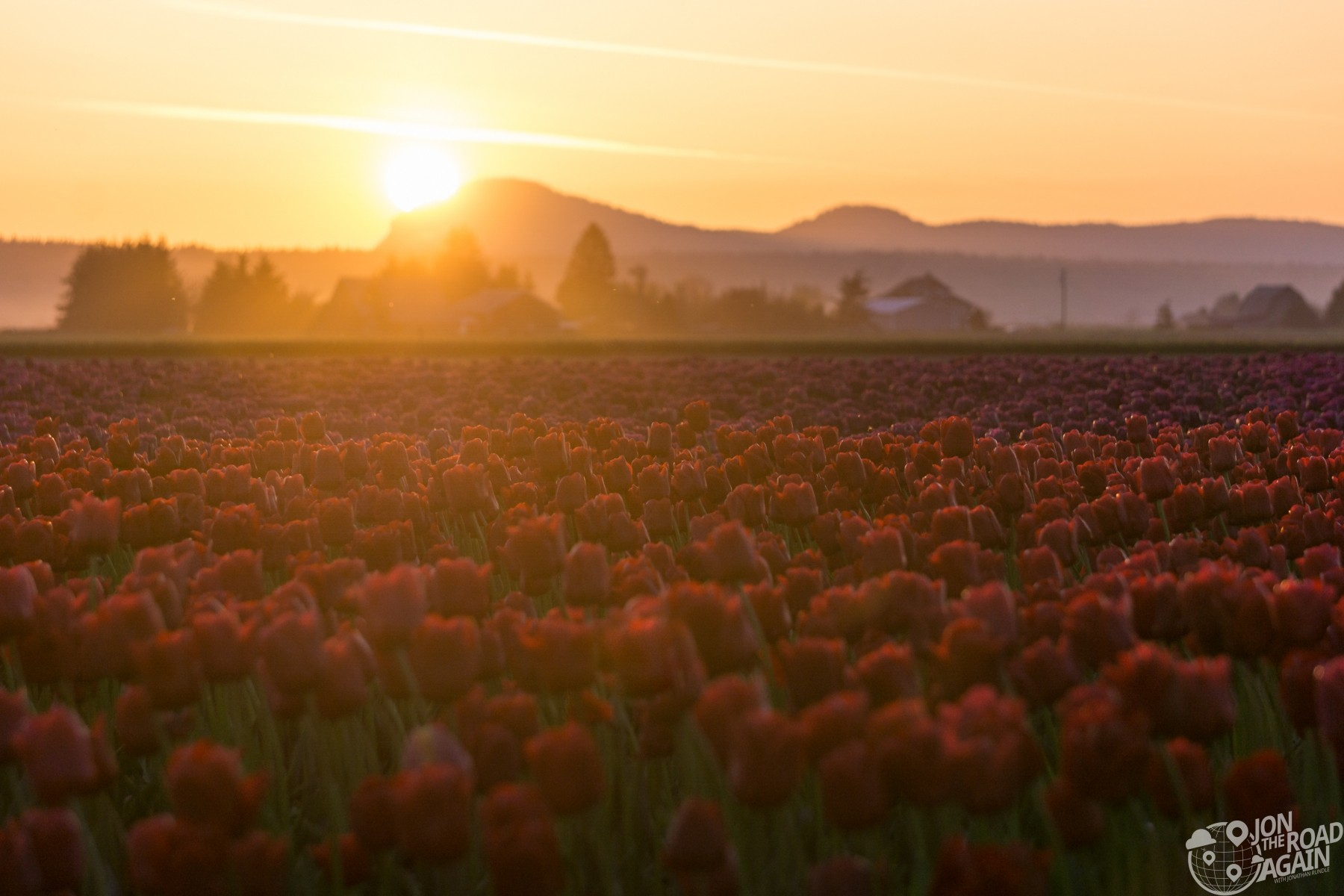 Skagit Valley Tulip Festival Sunset