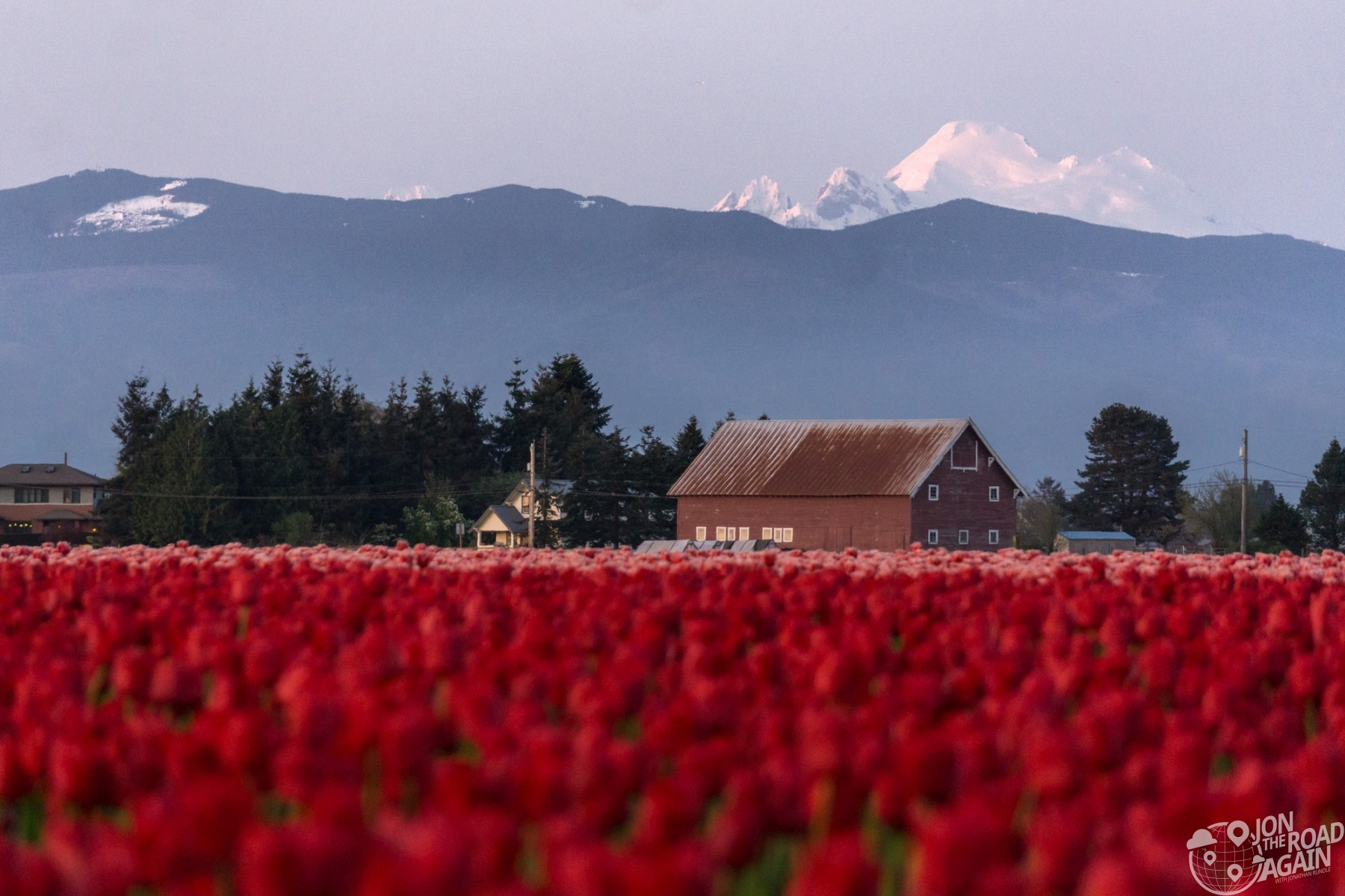 Mount Baker and Tulips