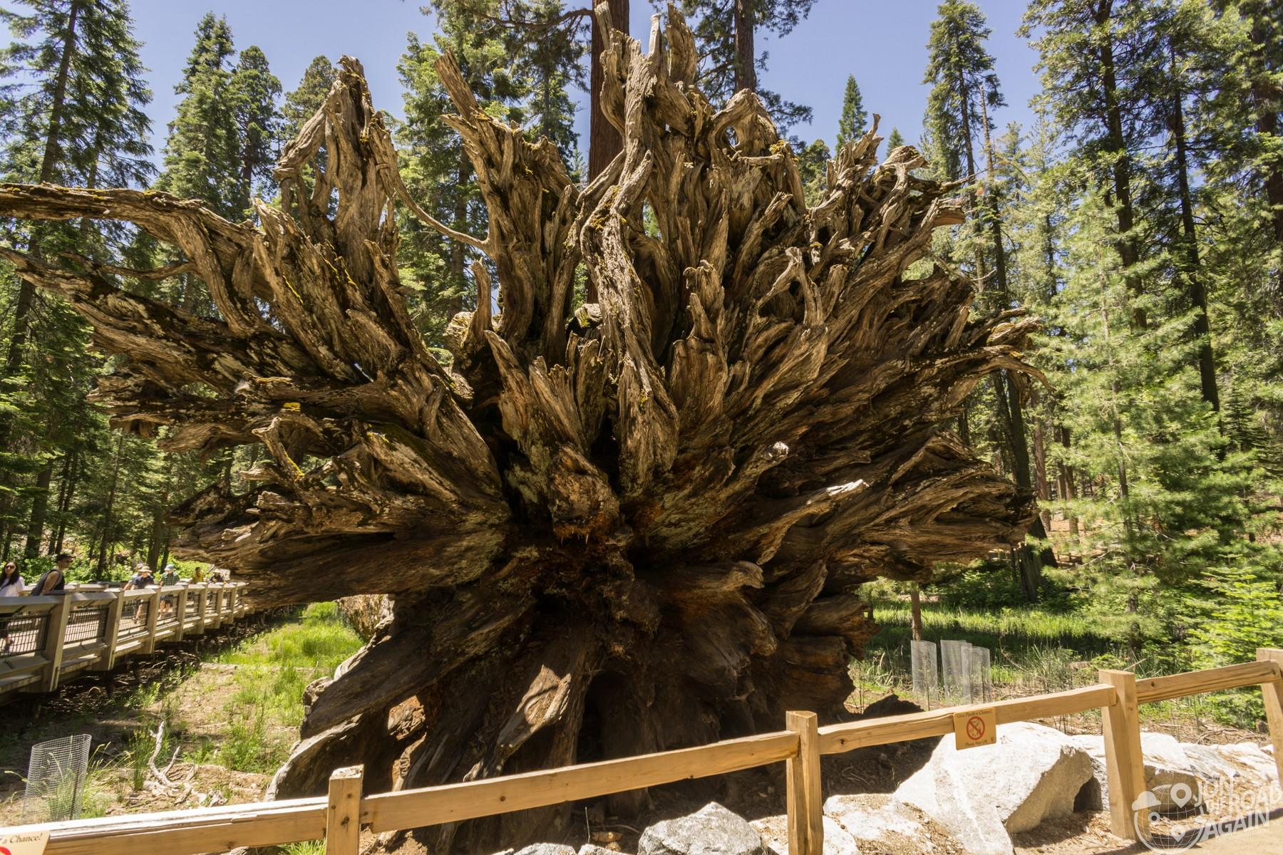 Fallen Monarch Yosemite