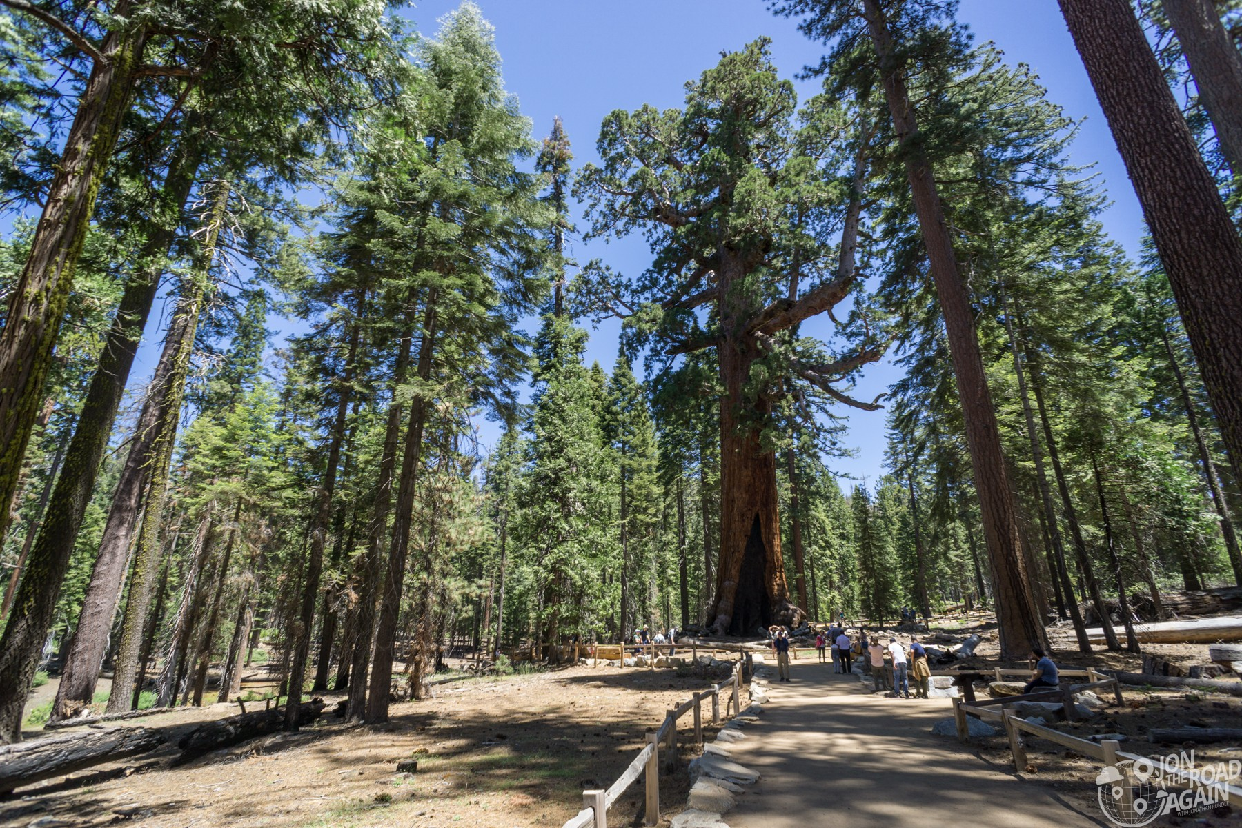 Grizzly Giant Mariposa Grove Yosemite