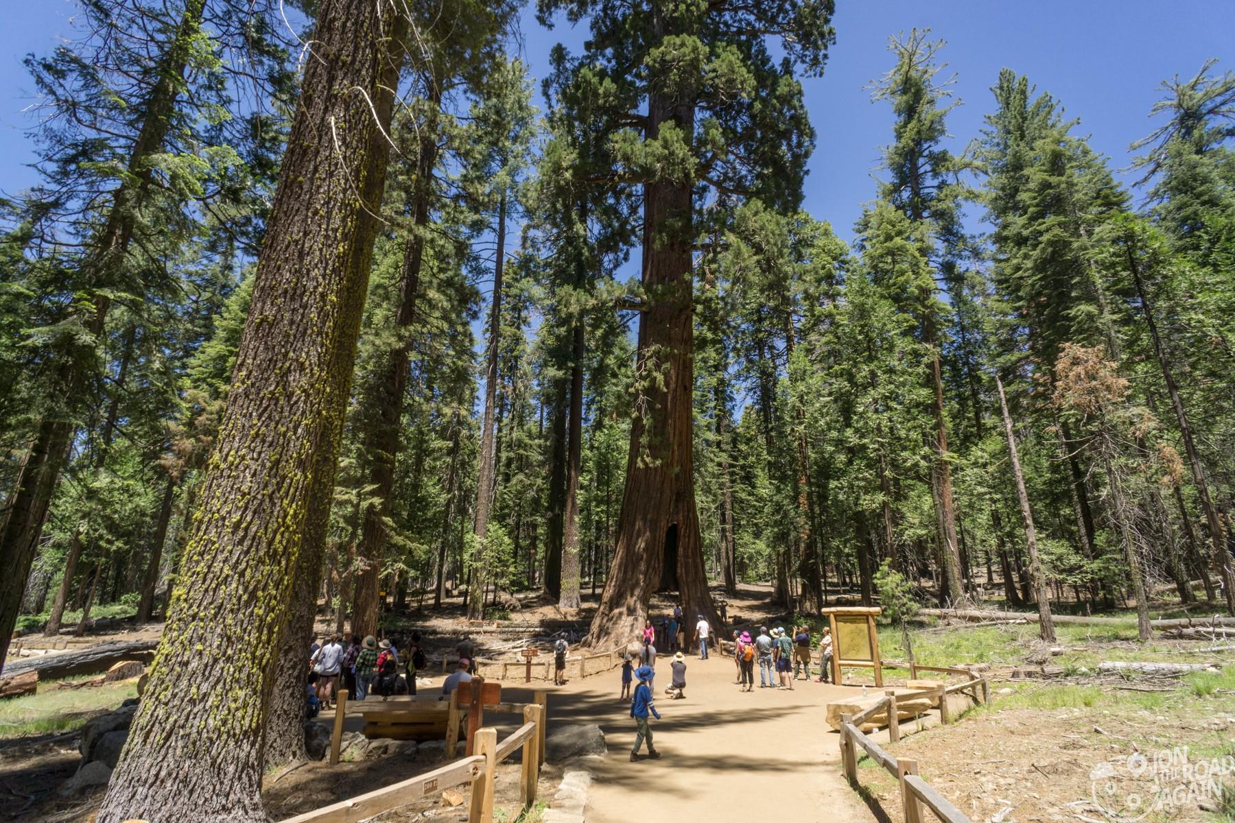 California Tunnel Tree Yosemite