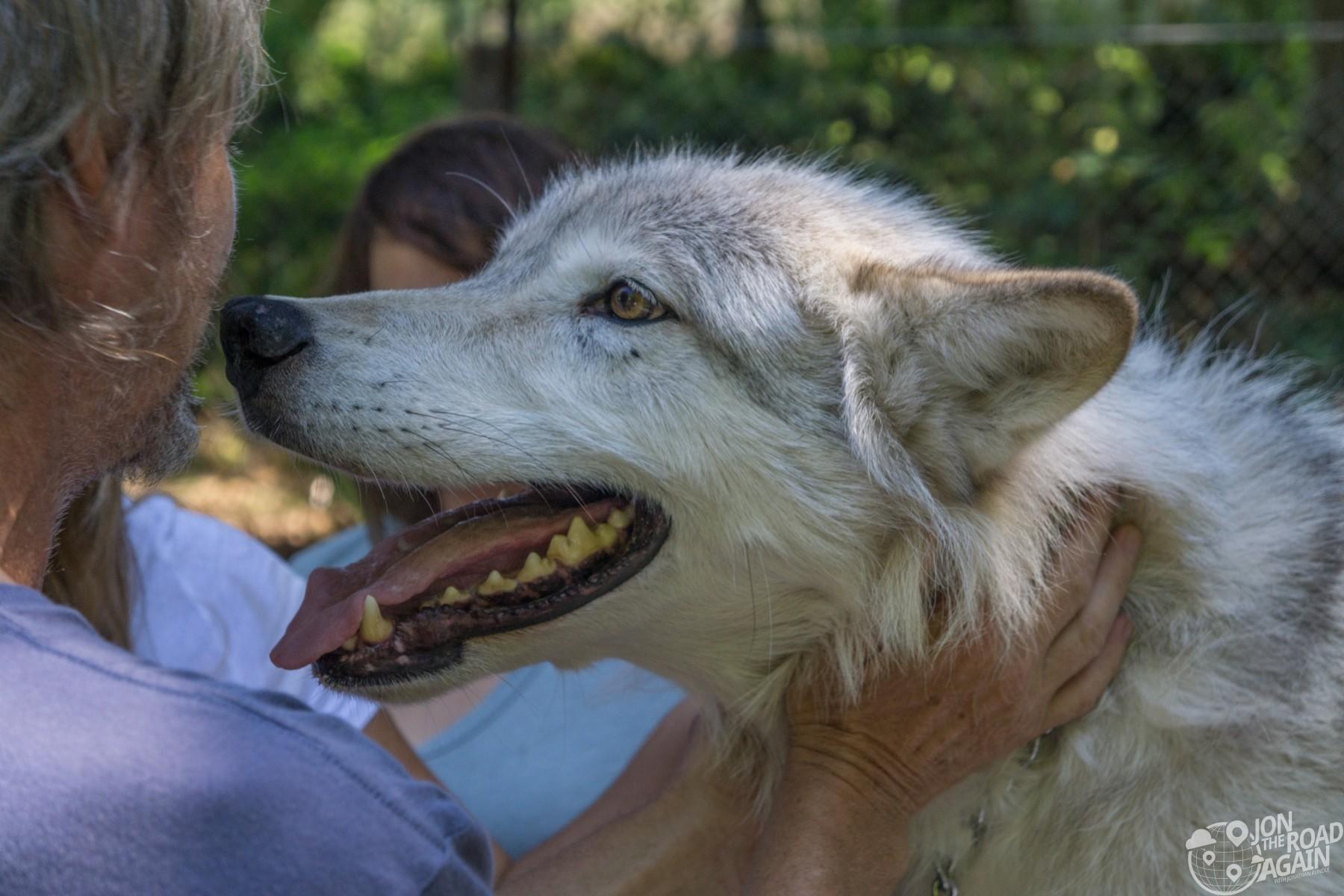 Predators of the Heart Wolf Sancutary