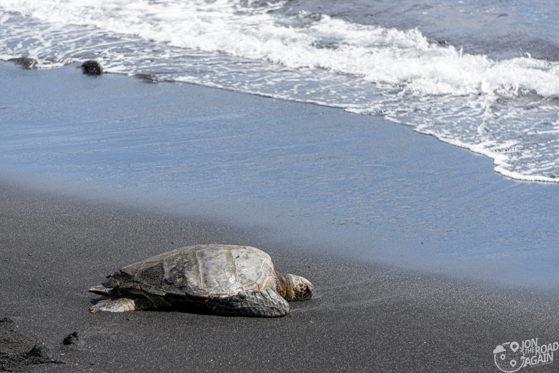 Turtle at Punalu'u black sand beach
