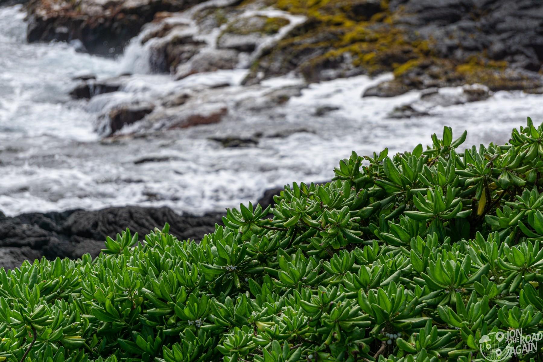 vegetation at Punalu'u black sand beach