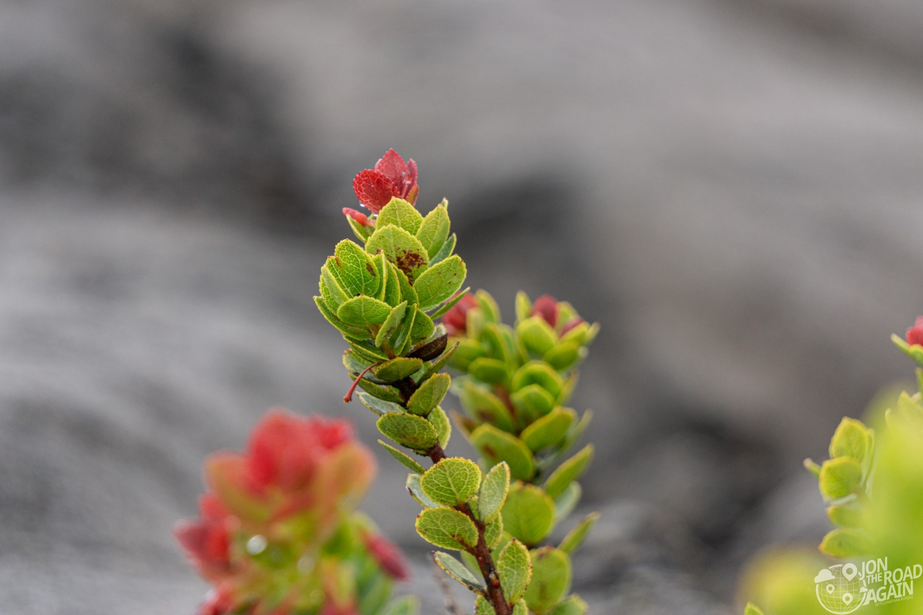 Plant growing through lava