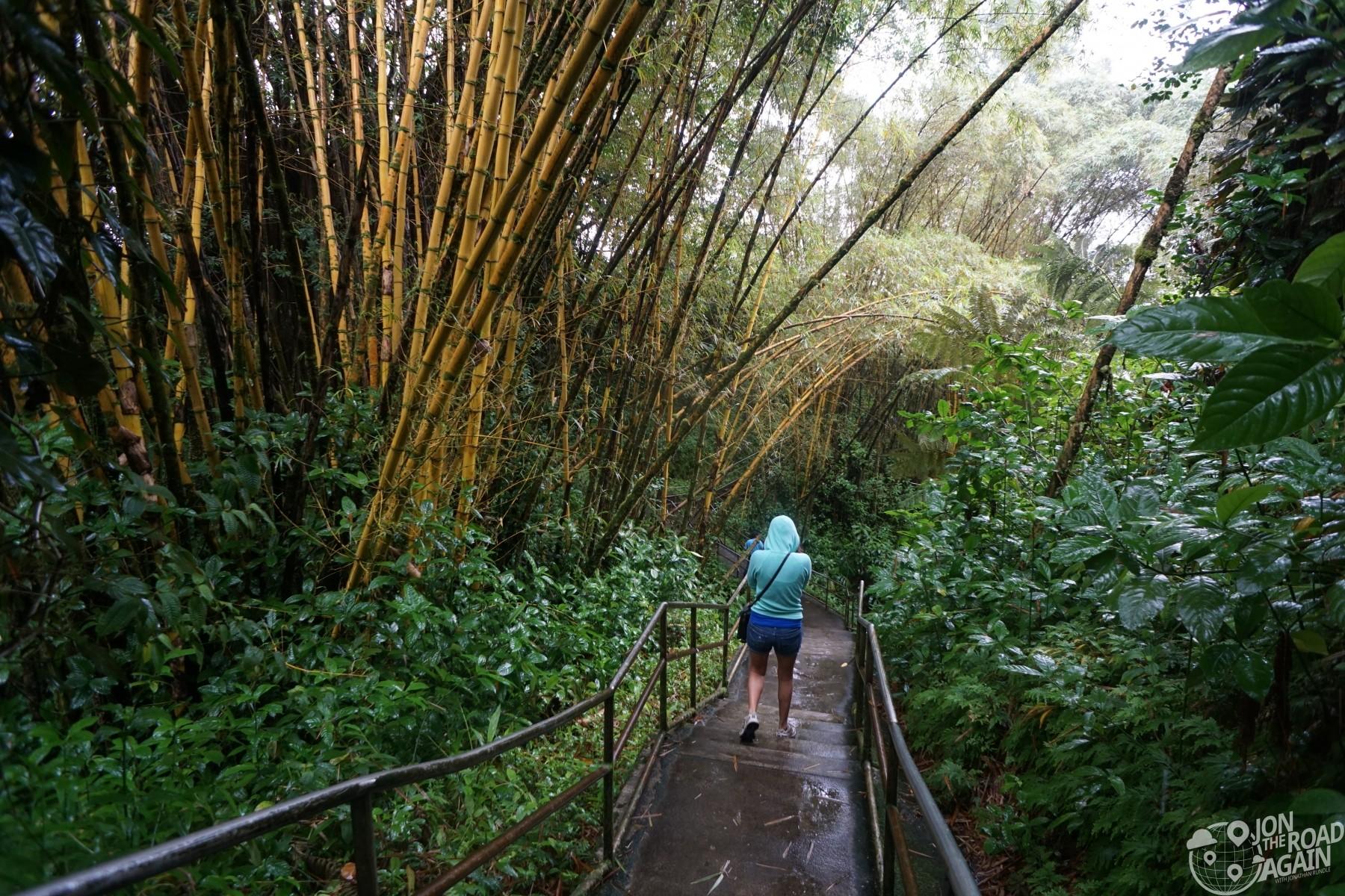 Akaka Falls Hiking Path