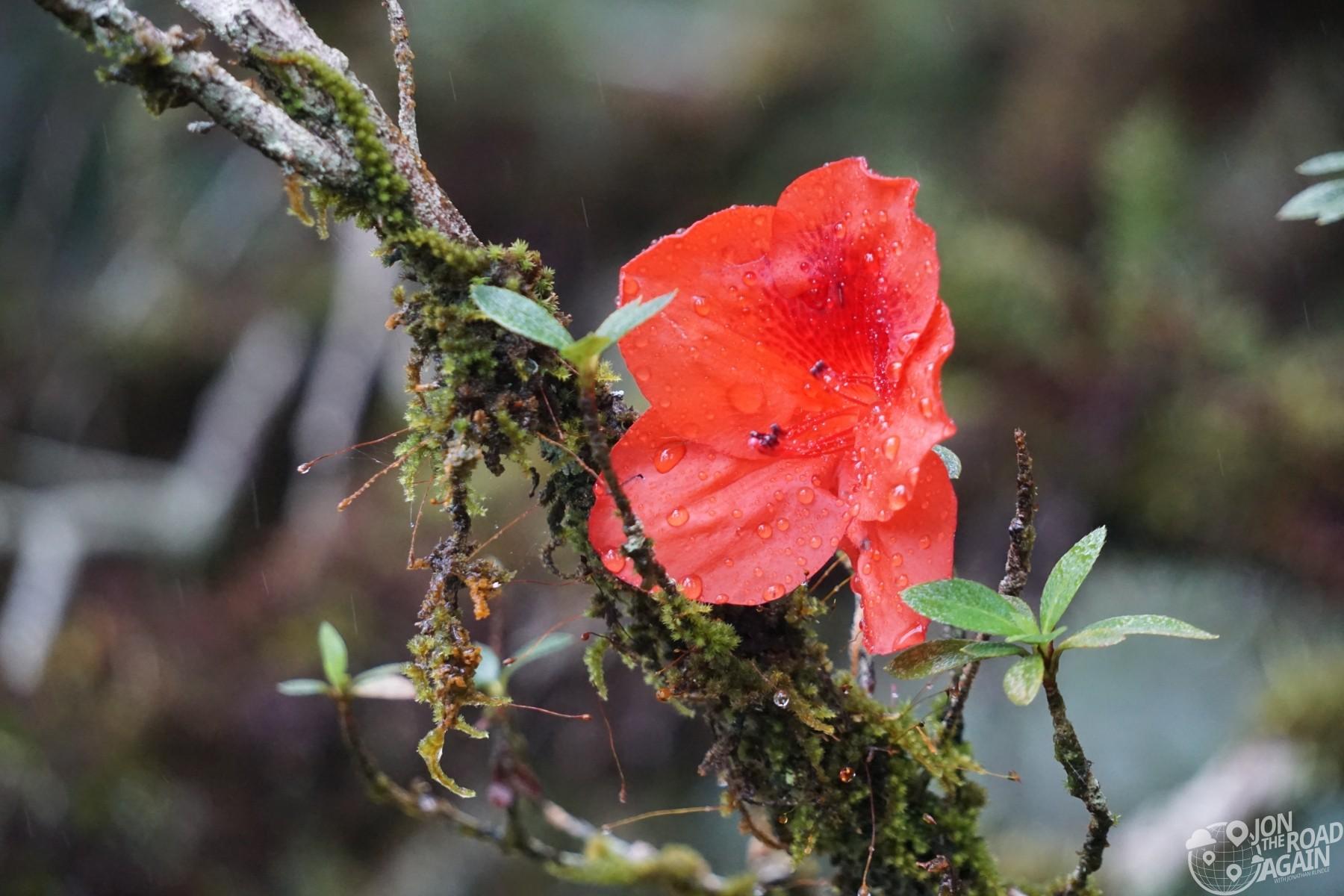 Akaka Falls flower