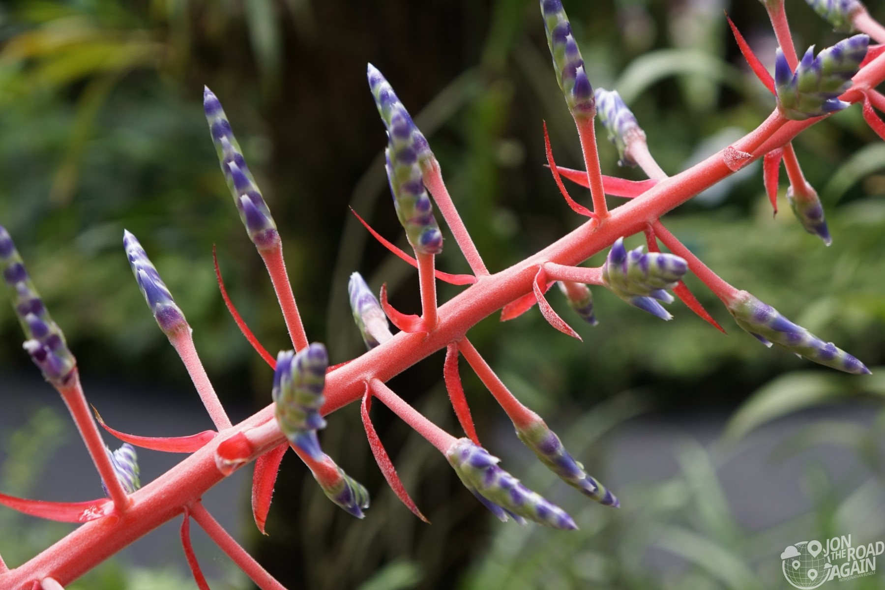 flower at Hawaii tropical botanical gardens