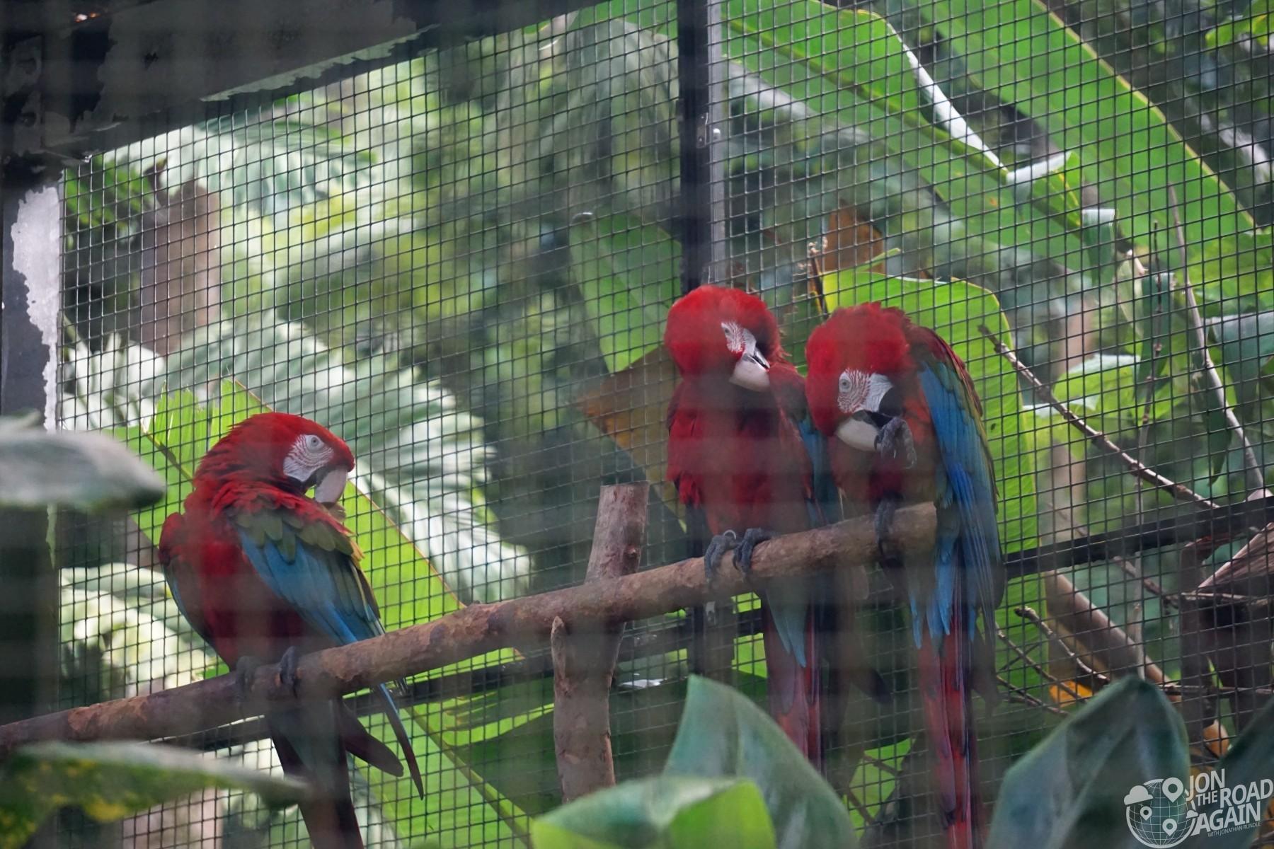 Parrots at Hawaii Botanical Garden