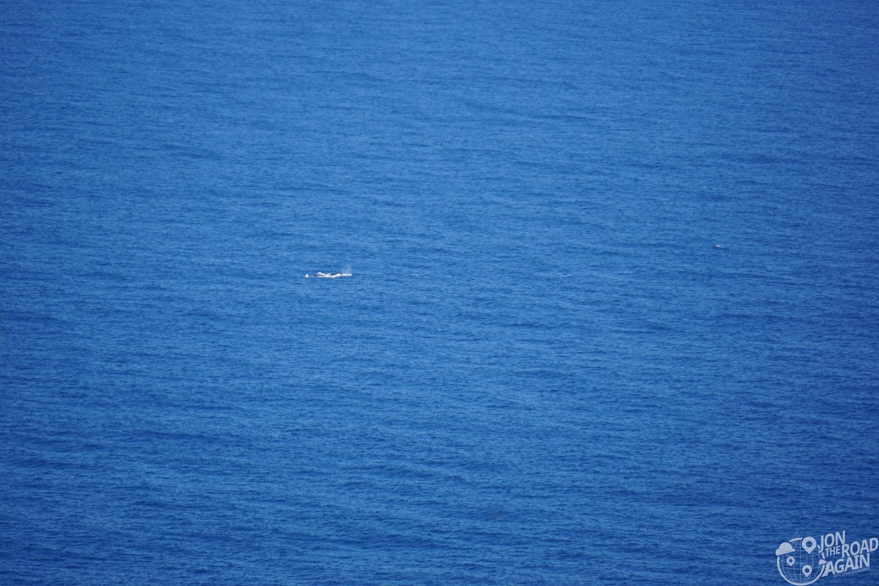 Whale at Waipio Valley