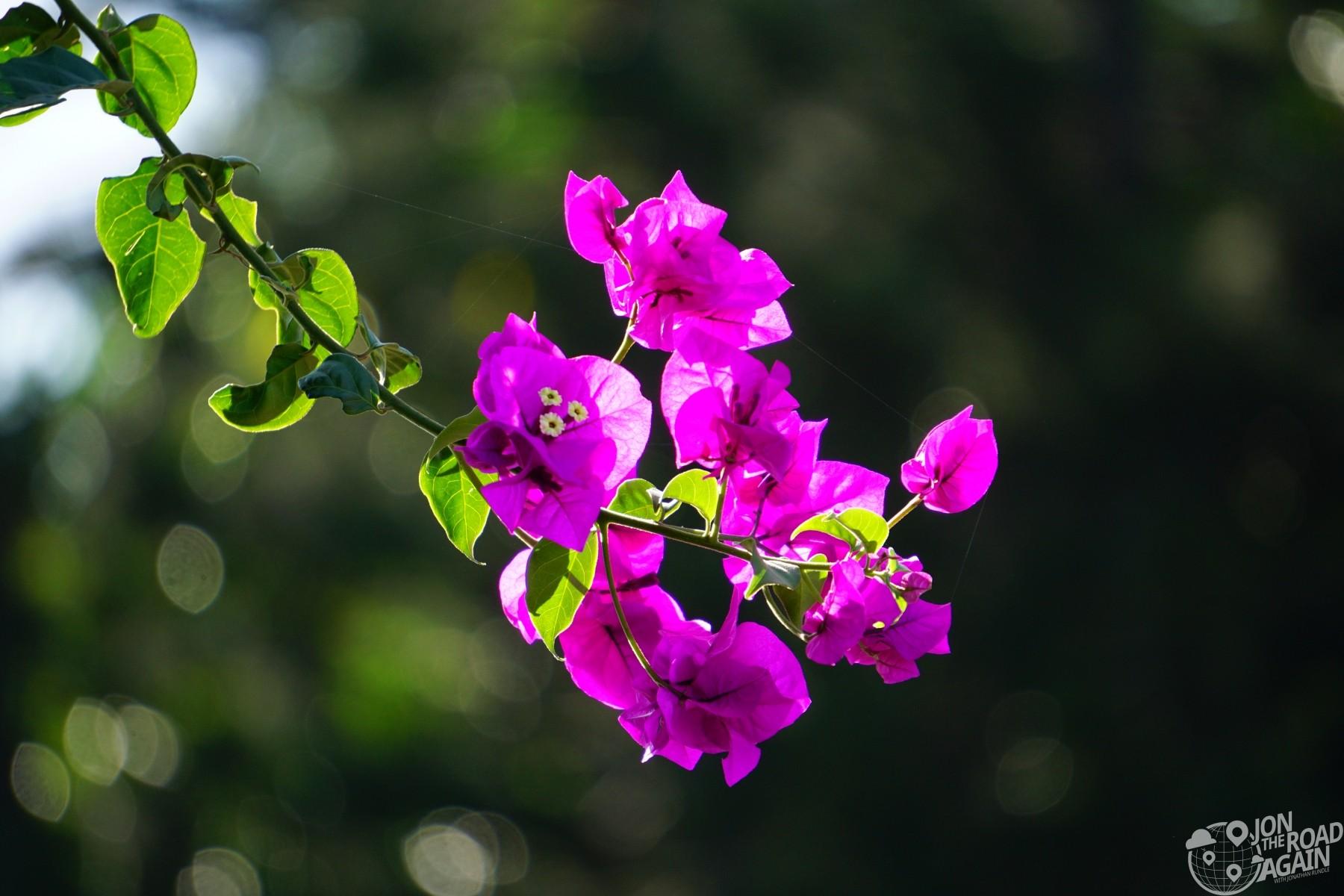 Waipio Valley Flower