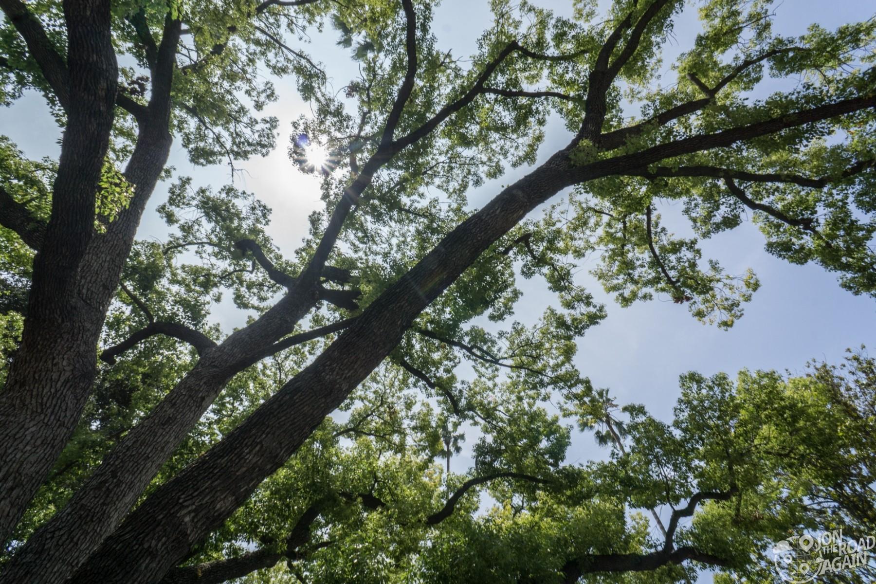 Marty McFly Tree