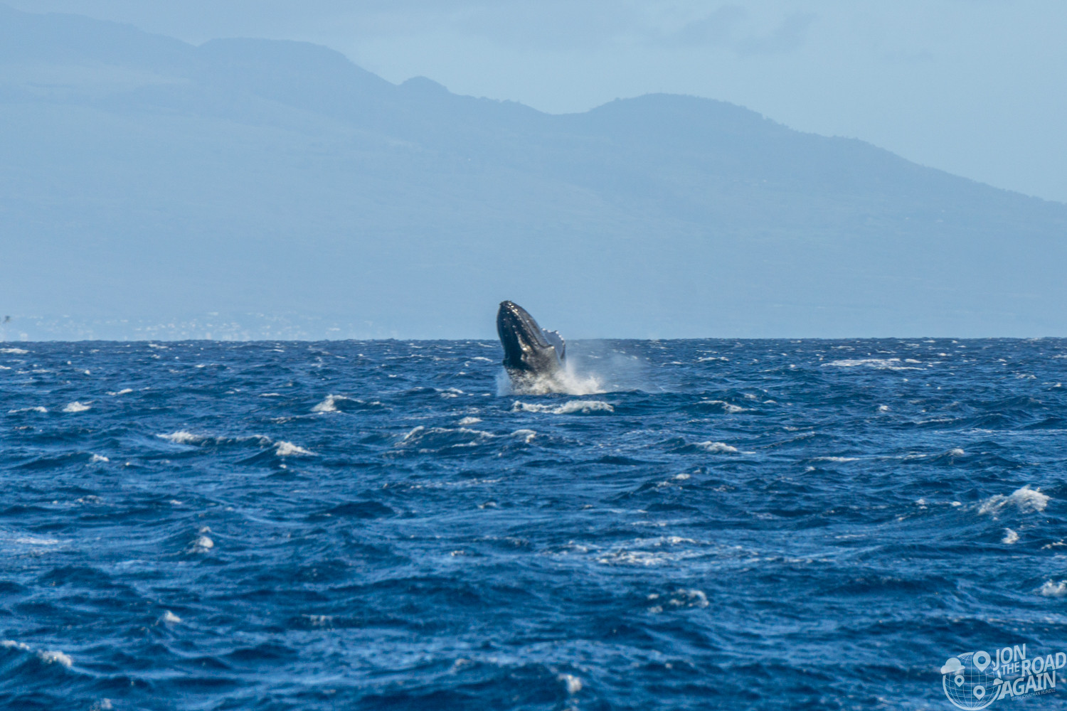 Maui whale watching sunset cruise