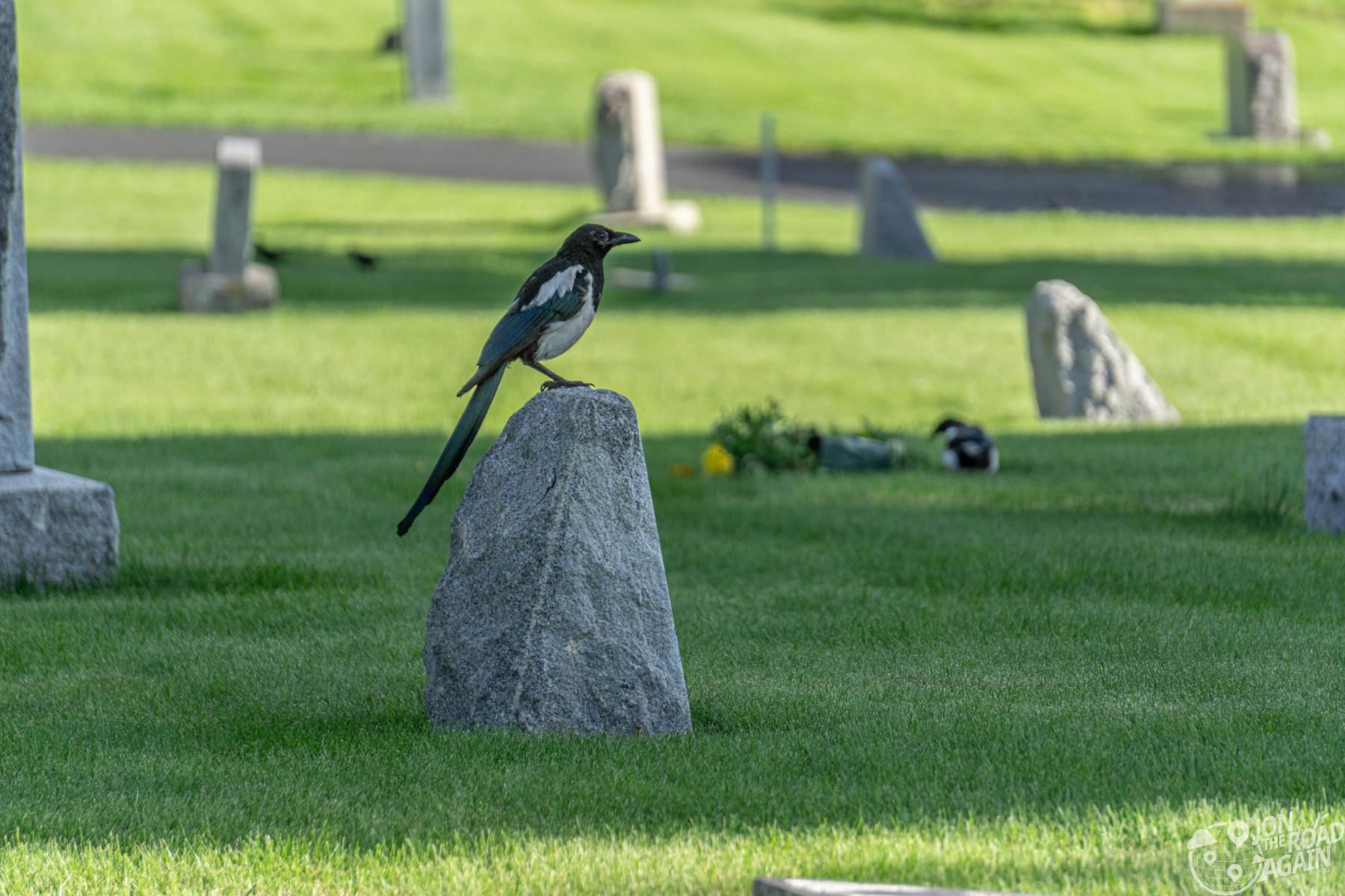 Bird on a gravestone at Ketchum Cemetery